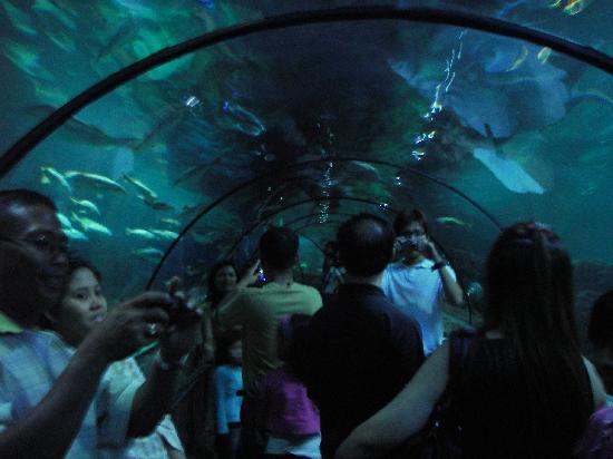 Ancol Dreamland: トンネル水族館