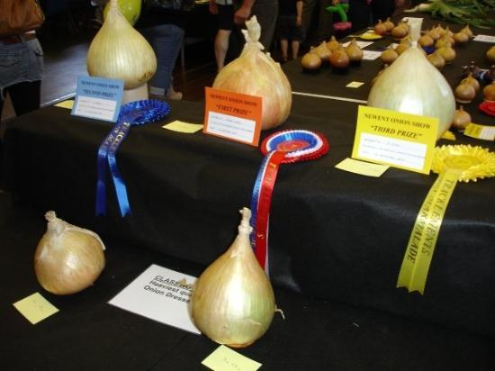 The winning onions at the 2009 Newent Onion Fayre competition.