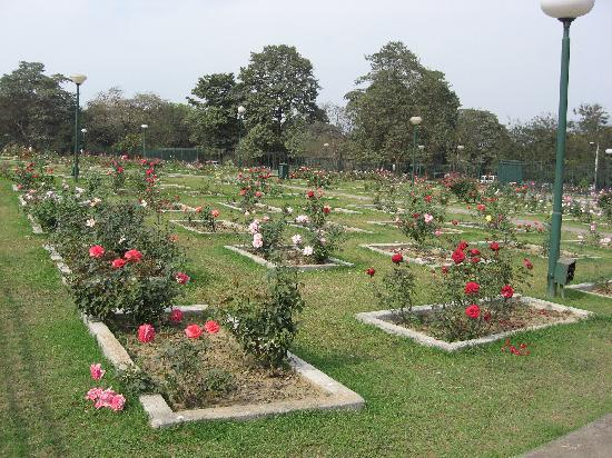 Jamshedpur, India: Rose Garden in Jubilee Park