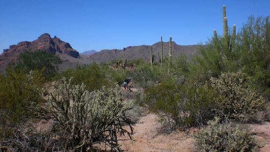 Saguaro Lake Guest Ranch: Mountain Bike at Hawes Mountain