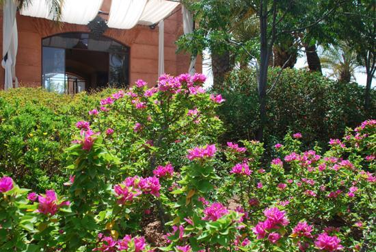 Villa Malekis : Jardin de  la villa Joly Amelkis -Marrakech