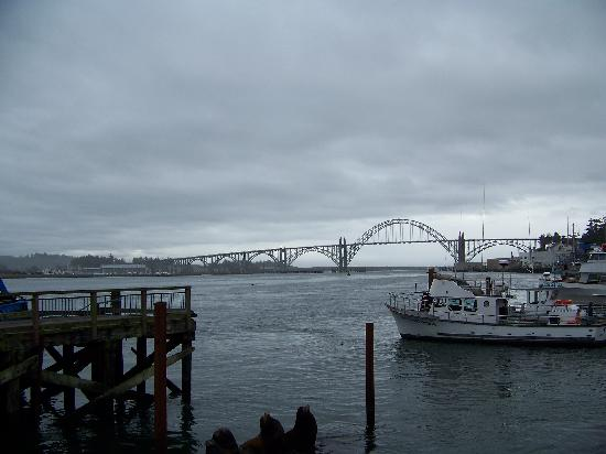 Bayfront in newport oregon picture of fish peddler 39 s for Newport oregon fishing