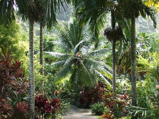 Tropical Gardens of Maui: One of the paths