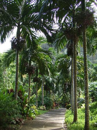 Tropical Gardens of Maui: another path