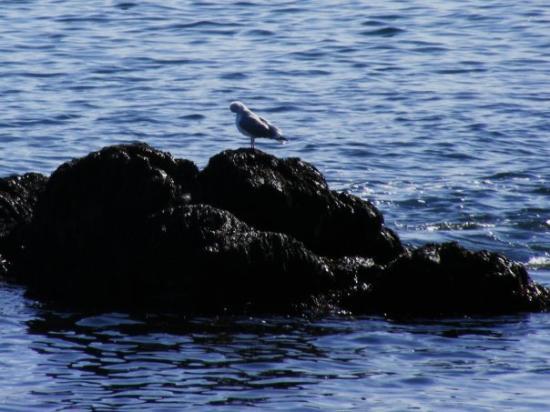 มาร์เบิลเฮด, แมสซาชูเซตส์: Seagull...