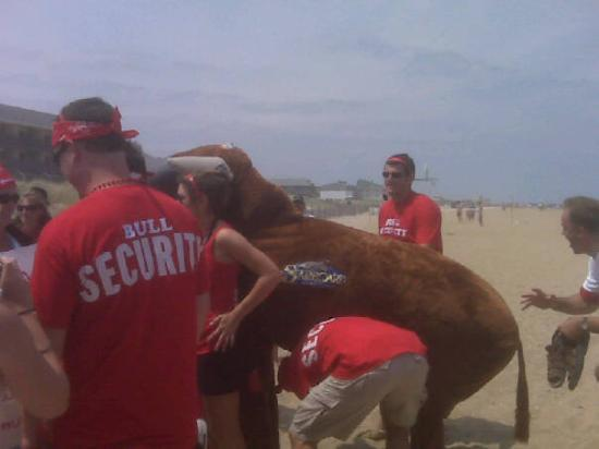 Dewey Beach, DE: Running with the bull