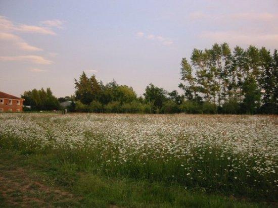 Chelmsford-billede