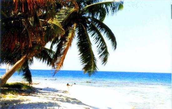 ปลาเซนเซีย, เบลีซ: We snorkeled through the coral surronding the deserted island
