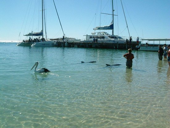 Denham, Australia: Dolphins at Monkey Mia