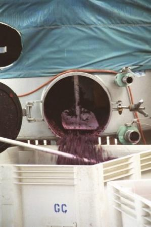 Goosecross Cellars: Grape Harvest at Goosecross