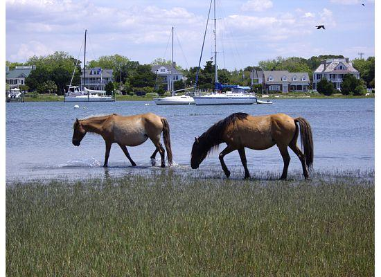 Beaufort, Carolina del Norte: Wild Ponies