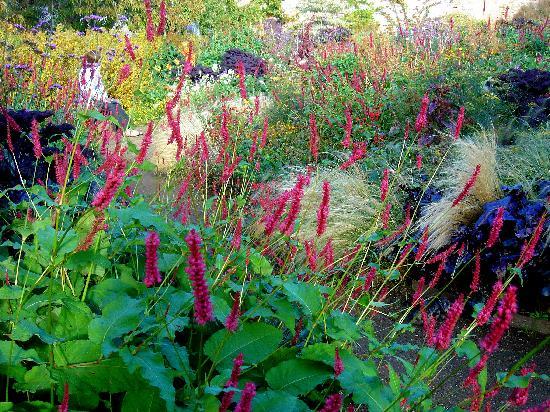 Cambo Estate Gardens: A treat for the eye!