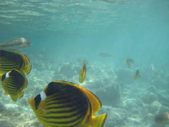 Sea Club Royal Nubian Island : pesci visibilida pochi cm dalla spiaggia dell'hotel