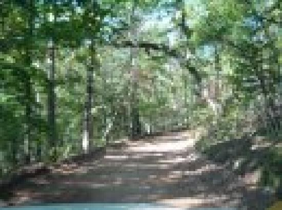 Ozark Mountain Cabins: Road leading to cabins