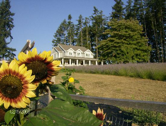 Damali Lavender Farm and B&B: Damali farmhouse with sunflowers & lavender