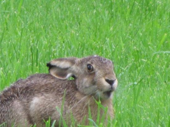 Mellerud, Schweden: Unser Haustier