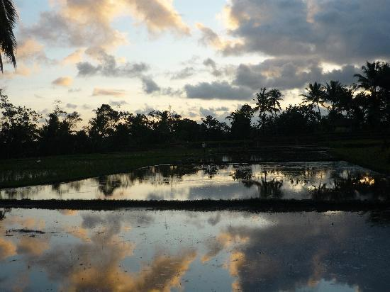 Sawah Sunrise Bed & Breakfast: a step away from the house