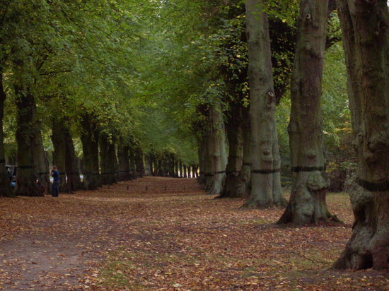 Worksop, UK: Lime Tree Avenue in the Autumn
