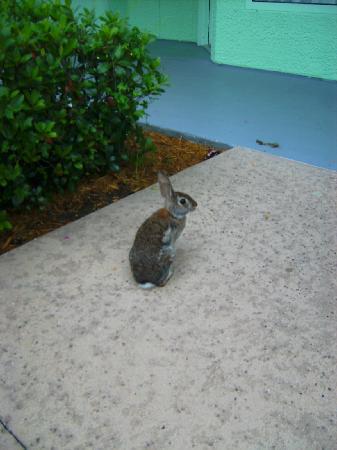 Disney's Pop Century Resort: Kaninchen mit Karotten füttern...freilebend...aber sicher doch ;)