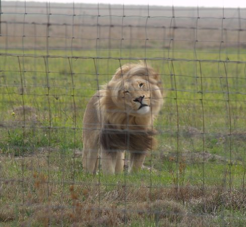 Wetevrede Lion Farm: It has so much more to offer that we did not even do
