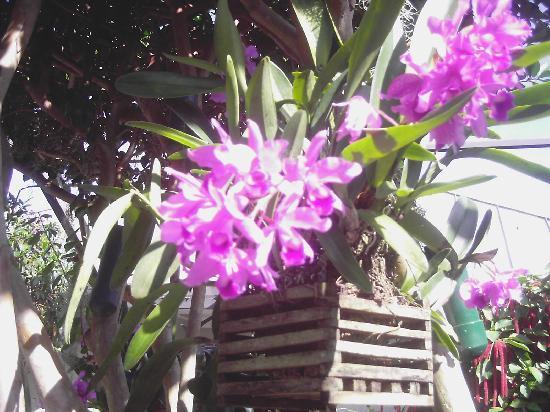 Butterfly World: flowers