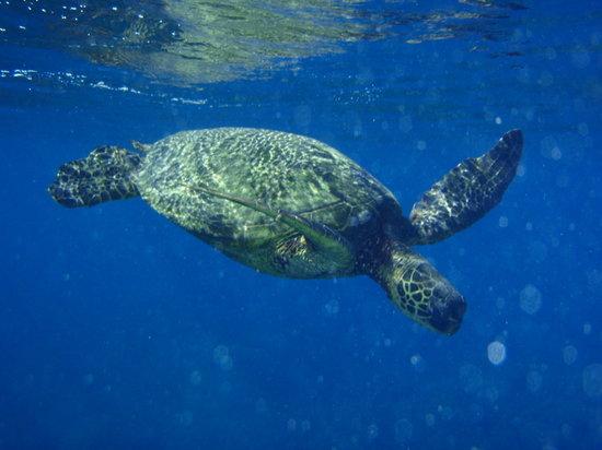 Maui Eco Tours