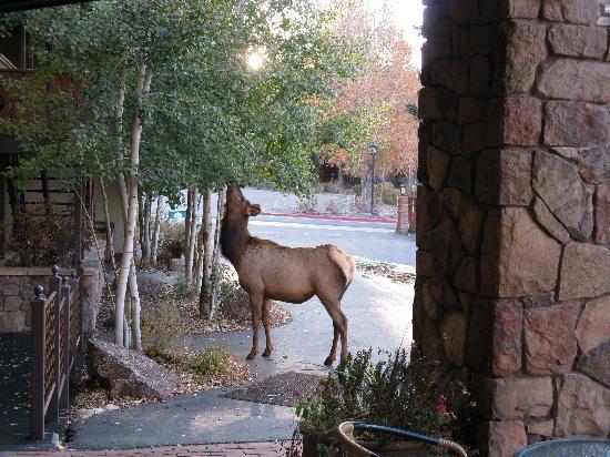 Elk outside reception door