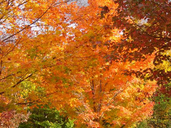 Franconia Notch State Park: fall colours