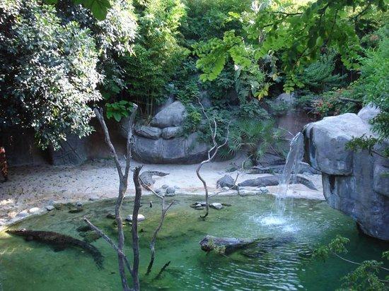 Bioparc Fuengirola: Cocodrilos