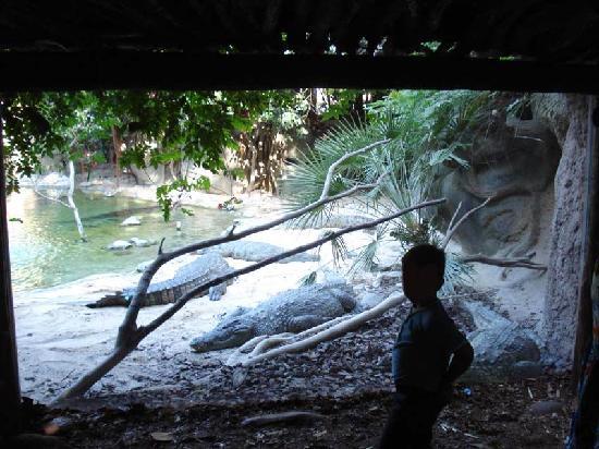 Bioparc Fuengirola: Cocodrilos detrás del vidrio, a centímetros...