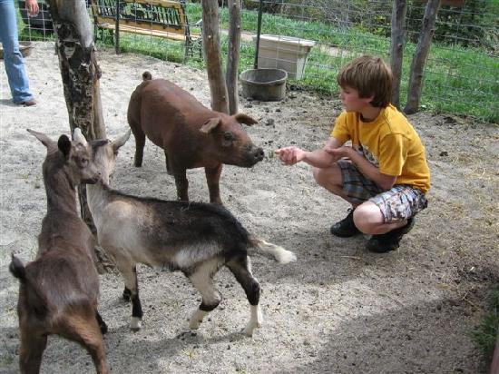Elk Mountain Ranch: Ranch petting zoo