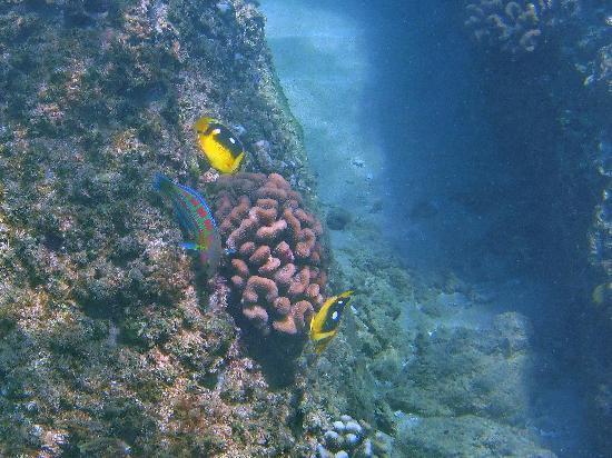 Hale Napili : The reef