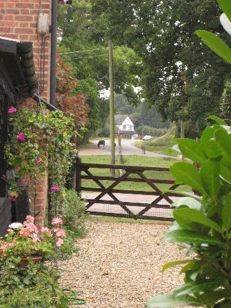 Wych Green Cottage: garden overlooking common grazing land