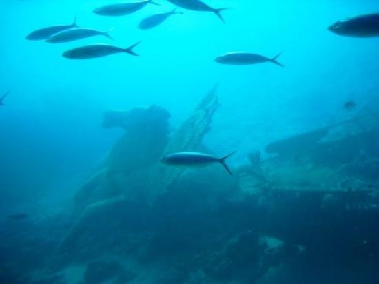 Chariots at the bottom of the red sea