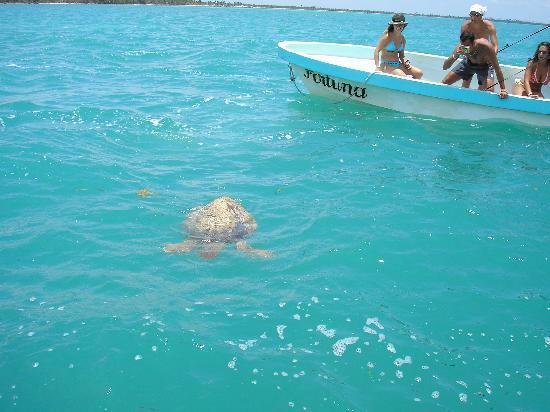 Sian Ka'an Biosphere Reserve: Tortuga Marina