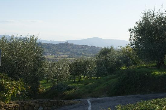 IL Gelsomino B&B: Olive groves surrounding the town.