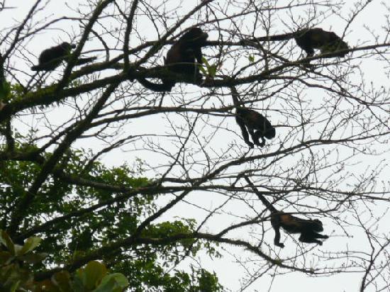Monkeys at Chalet Nicholas