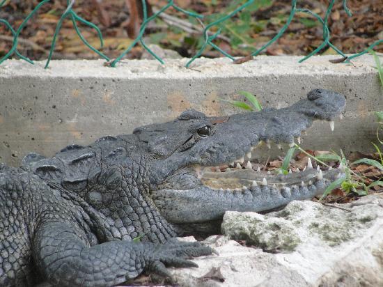 Hacienda Mundaca: One of the few alligators