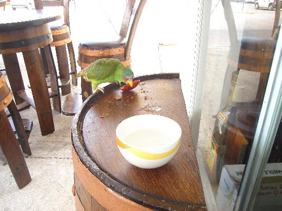 Tequila Town: tequila parrot