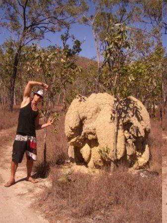 Mareeba, Austrália: termitenhuegel ueber all in der savanne
