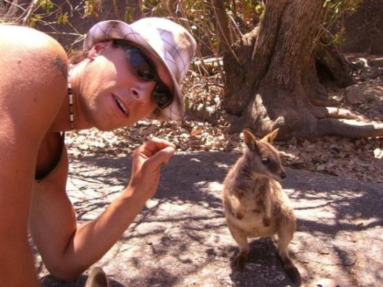 Mareeba, Australien: das ist mein freund das beuteltier