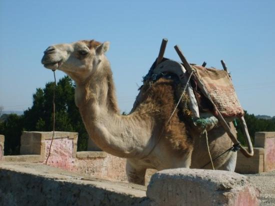 摩洛哥-馬扎甘葡萄牙城照片