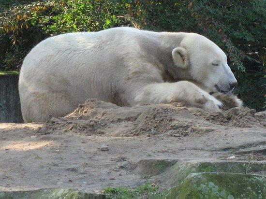 Hotel Palace Berlin: Berlin Zoo - Besuch bei dem Eisbär KNUT
