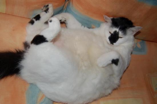 Hotel Pousada Guarana: sweet little lap kitty