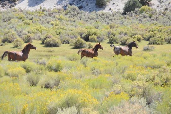 Wild Horse Safaris: Wild horses