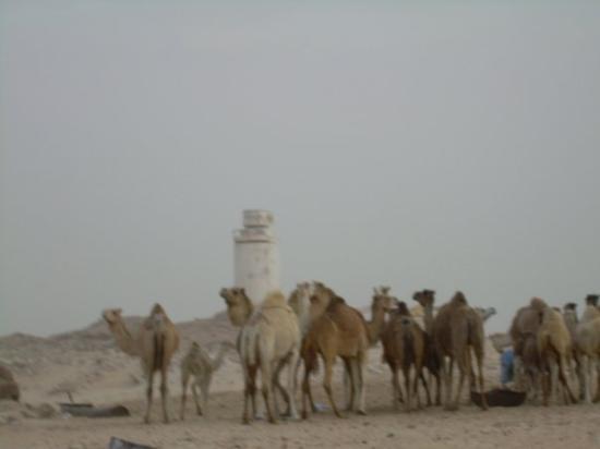 Foto de Nouadhibou