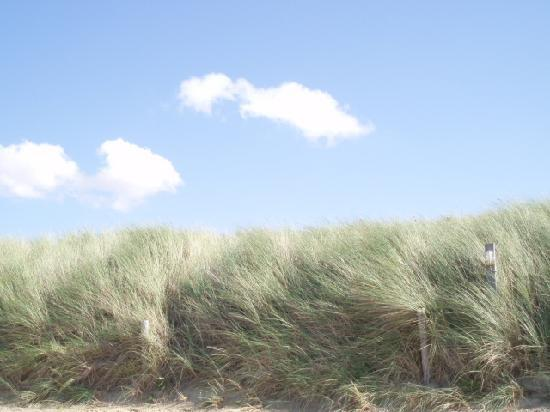 Dunes of Cadzand.