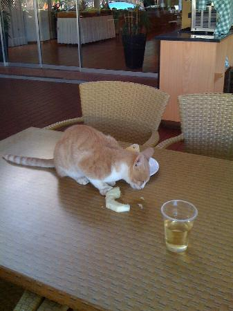 Atlantica Aeneas Hotel: Unwanted guest on the table at the 5* restaurant?