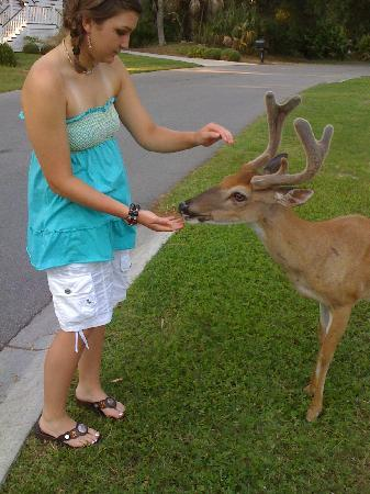 Fripp Island Resort: feeding deer in our yard on fripp island