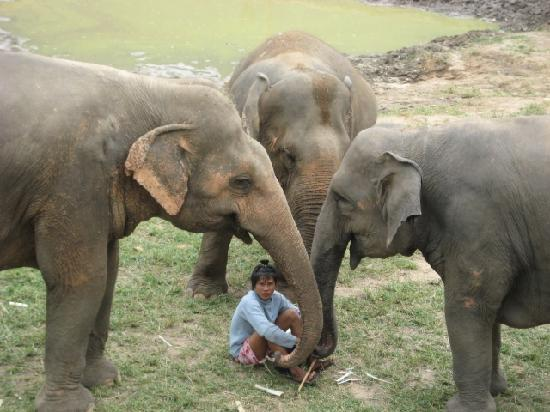 THIS is the way to spend time with elephants - Elephant ... - photo#39